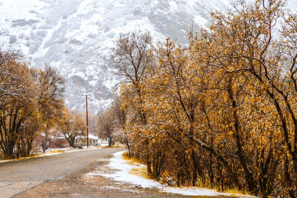 Fall snow.  Taggert, Utah.